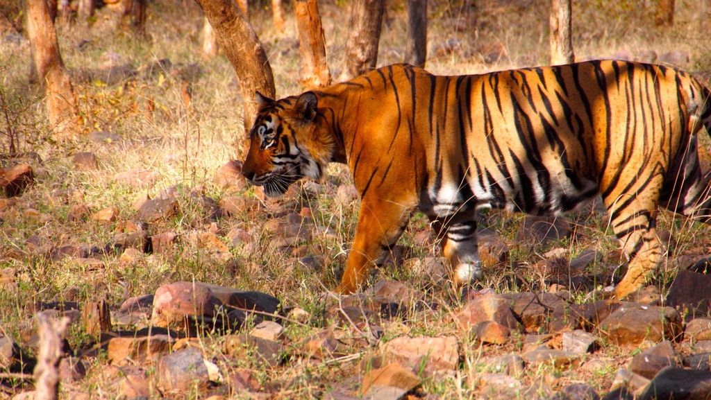 A fresh event Ranthambore festival 2019 is scheduled in January