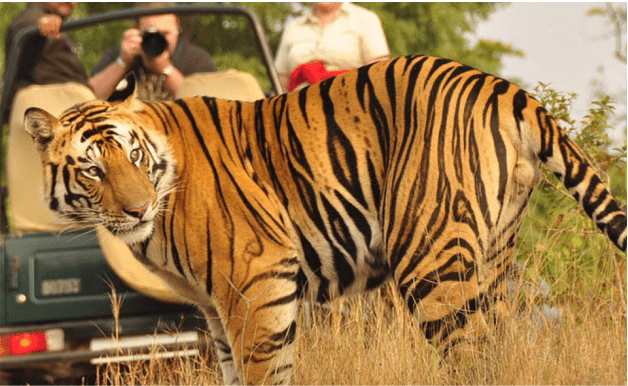 GOLDEN TRIANGLE TOUR WITH RANTHAMBORE PICTURE