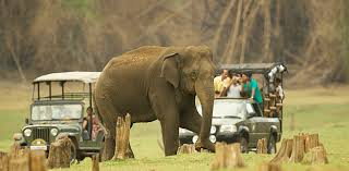BANDIPUR NATIONAL PARK WILD LIFE TOUR