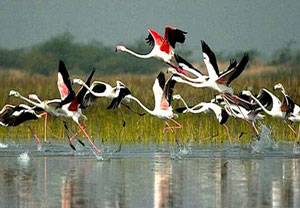 7 NIGHTS 8 DAYS GOLDEN TRIANGLE TOUR WITH BHARATPUR & RANTHAMBORE