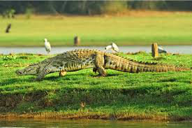 NAGARHOLE WILDLIFE TOUR