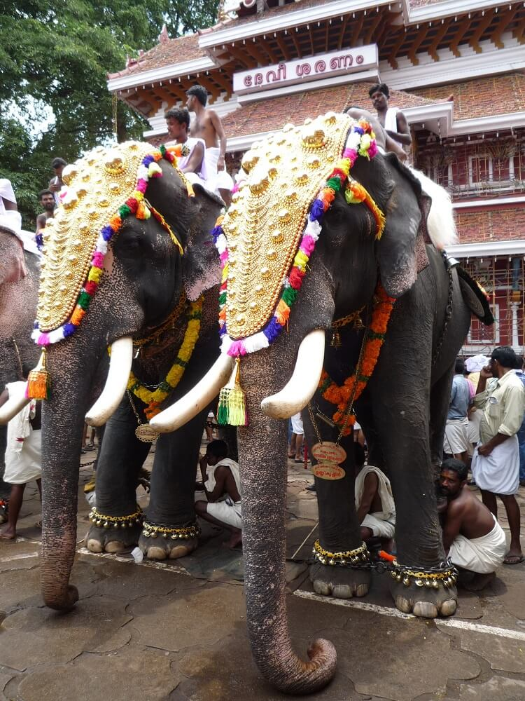Elephants in Kerala Festival
