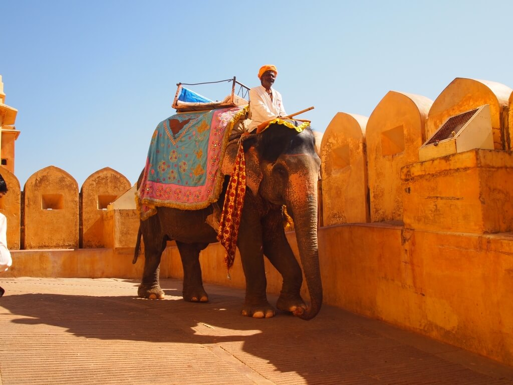 Elephant safari at Amber fort, Jaipur